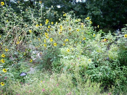 More Undergrowth