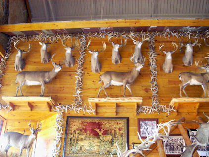 Deer and Horns