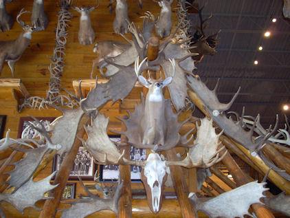 So Many Horns…